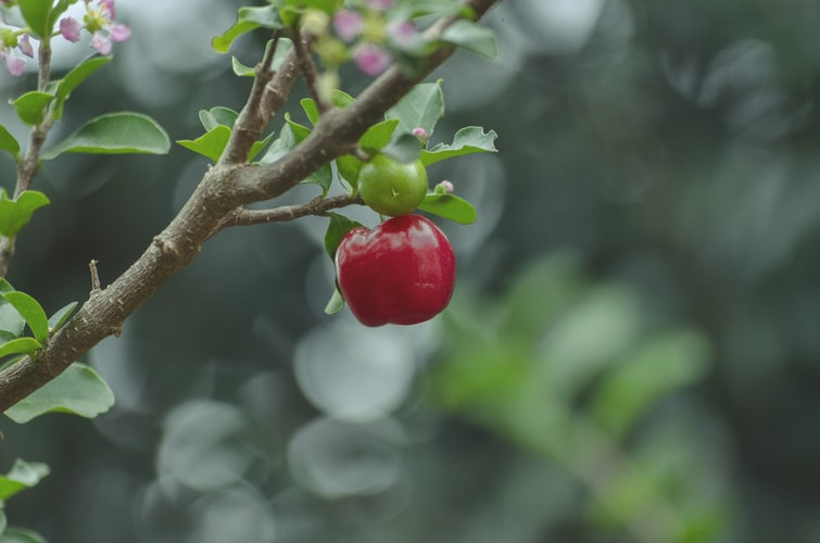 Cherry Pickers Revisited